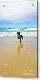 Acrylic Print featuring the photograph Beach Dog And Reflection By Kaye Menner by Kaye Menner