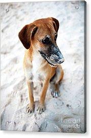 Beach Dog Acrylic Print by John Rizzuto