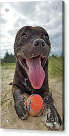 Acrylic Print featuring the photograph Beach Dog - More Play? By Kaye Menner by Kaye Menner