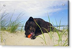 Acrylic Print featuring the photograph Beach Dog - Rest Time By Kaye Menner by Kaye Menner