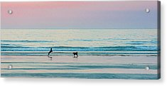 Beach Dogs Playing At Dawn Acrylic Print