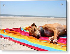 Beach Dreams Are Made Of These Acrylic Print