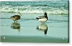 Beach Ducks Acrylic Print