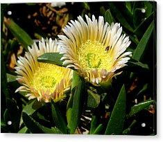 Beach Flower Acrylic Print by Joyce Woodhouse