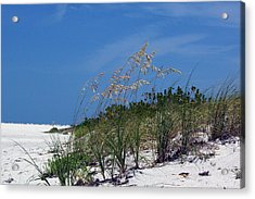 Beach Grass 3 Acrylic Print by Evelyn Patrick
