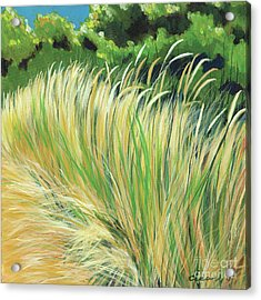 Beach Grass 4 Acrylic Print by Melody Cleary