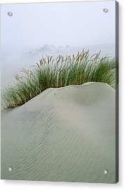 Beach Grass And Dunes Acrylic Print