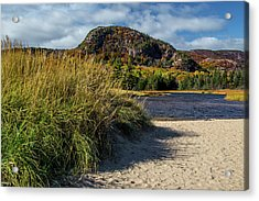 Beach Grass Acrylic Print by Brent L Ander