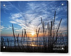 Beach Grass Acrylic Print by Delphimages Photo Creations