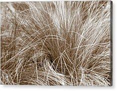 Acrylic Print featuring the photograph Beach Grass by Frank Tschakert