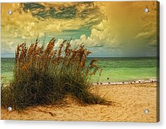 Beach Grass Acrylic Print by Gina Cormier