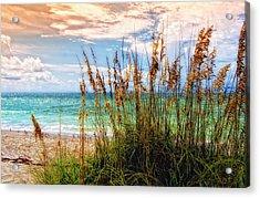 Beach Grass II Acrylic Print by Gina Cormier