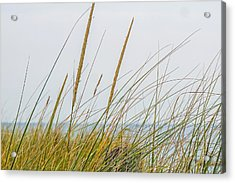 Acrylic Print featuring the photograph Beach Grass by Kendall McKernon