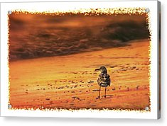 Beach Gull Acrylic Print