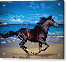 Beach Horse Acrylic Print by Robert Smith
