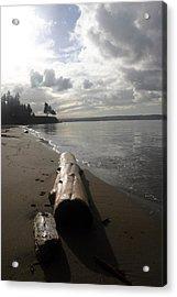 Beach Logs Acrylic Print by Mary Haber