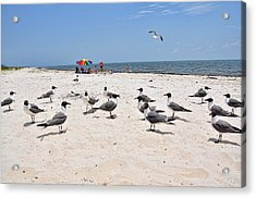 Acrylic Print featuring the photograph Beach Party by Jan Amiss Photography