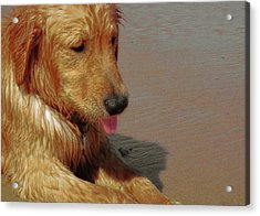 Beach Pup Acrylic Print by JAMART Photography