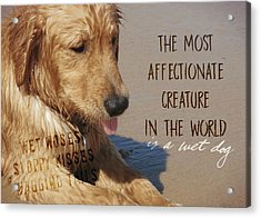 Beach Pup Quote Acrylic Print by JAMART Photography
