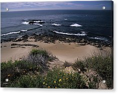 Beach Reef Point Wildflowers Acrylic Print