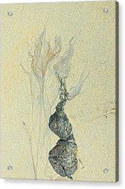 Beach Sand 3 Acrylic Print by Marcia Lee Jones