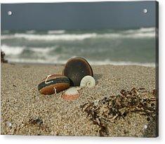 Beach Treasures 1 Acrylic Print by Kimberly Mohlenhoff