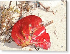 Beach Treasures 1 Acrylic Print