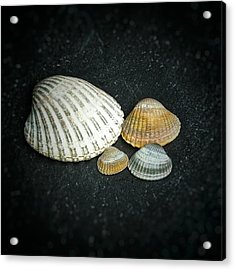 Beach Treasures  Acrylic Print by Karen Stahlros