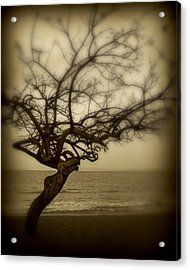 Beach Tree Acrylic Print by Perry Webster