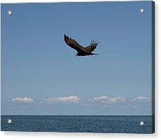 Beach Vulture Acrylic Print