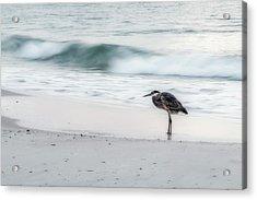 Beachbird Acrylic Print