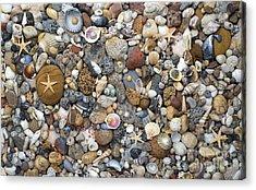 Beachcombing Pattern Acrylic Print by Tim Gainey