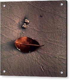 Beached Leaf Acrylic Print