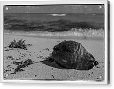 Acrylic Print featuring the photograph Beachside by Melinda Ledsome