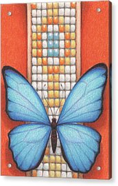 Beaded Morpho Acrylic Print by Amy S Turner