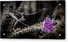 Beadwork Acrylic Print by Annette Berglund