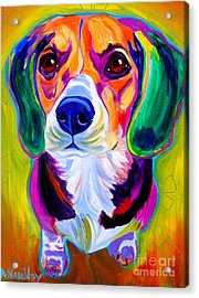 Beagle - Molly Acrylic Print by Alicia VanNoy Call