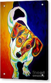 Beagle - Scooter Acrylic Print