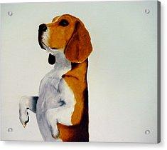 Beagle Acrylic Print by Dick Larsen