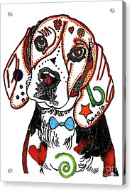 Beagle Drawing Acrylic Print by Christine Perry