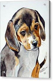 Beagle Puppy Acrylic Print