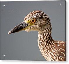 Beak Acrylic Print by John Hughes