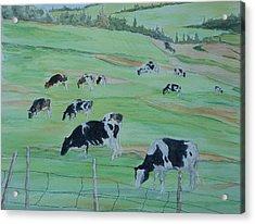 Beanie's Cows Acrylic Print