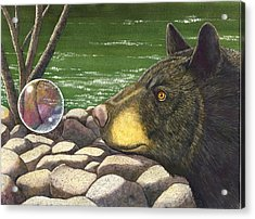 Bear Bubble Acrylic Print by Catherine G McElroy