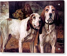 Bear Dogs Without Border Acrylic Print by H R Poore