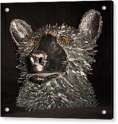 Bear Head Bust Acrylic Print by Jeff Orebaugh