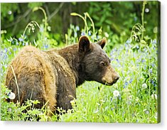 Bear In Flowers Acrylic Print