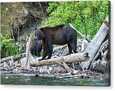 In The Great Bear Rainforest Acrylic Print