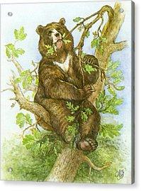 Bear Acrylic Print by Natalie Berman
