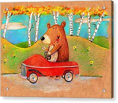 Bear Out For A Drive Acrylic Print by Scott Nelson